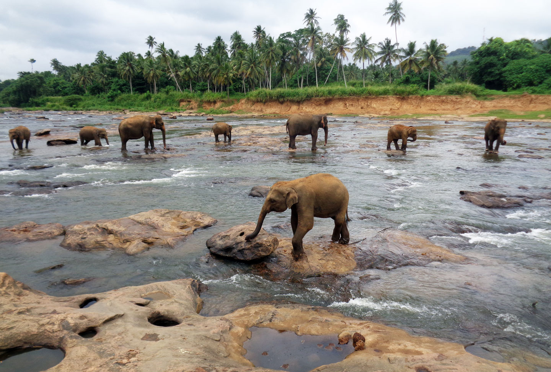 Auslandsaufenthalt Sri Lanka