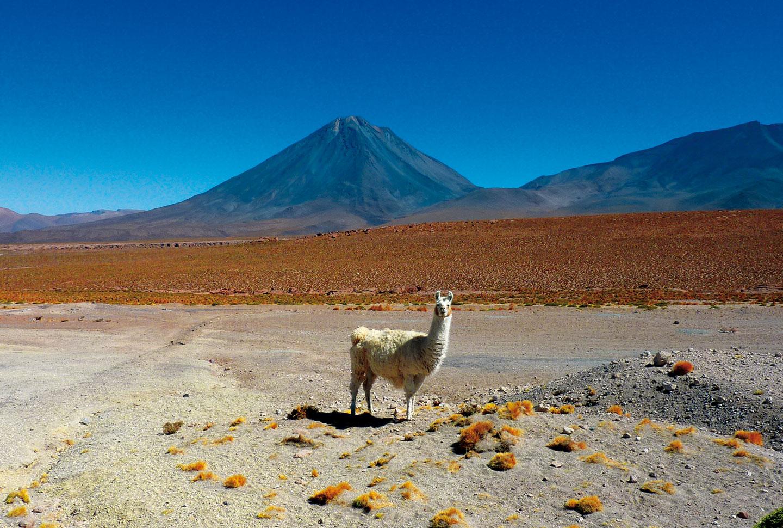 Au Pair Chile