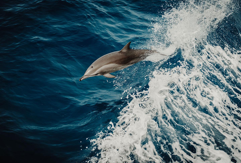 Delfin-Projekt Australien
