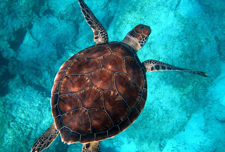 Schildkröten-Projekt Australien