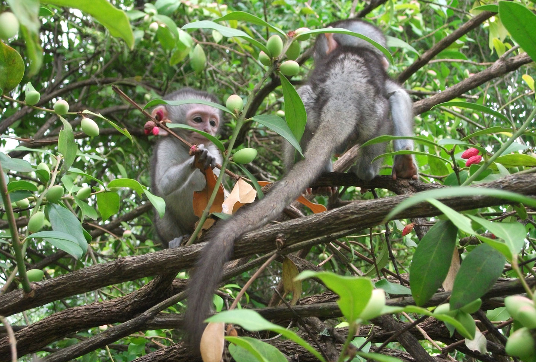 Affenprojekt Südafrika