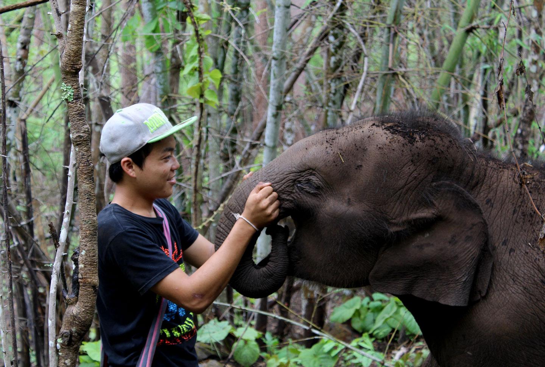 Elefantenprojekt Thailand