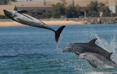 australien-delfin-projekt-teaser