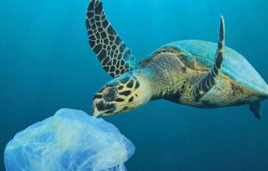 freiwilligenarbeit-plastikartikel-blog-teaser