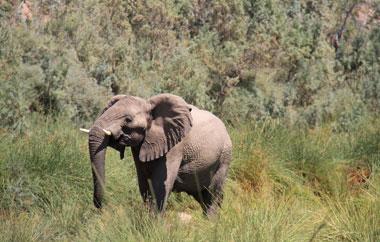 freiwilligenarbeit-namibia-teaser-erfahrungsbericht-sarah