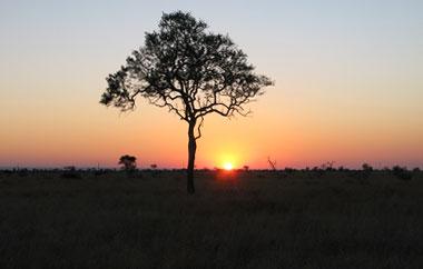 affenprojekt-suedafrika-erfahrungsbericht-irits