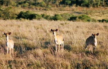 projekte-grossraum-krueger-nationalpark-teaser-erfahrungsbericht-nicola