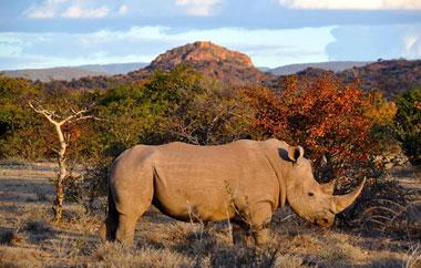wildlife-projekte-suedafrika-teaser