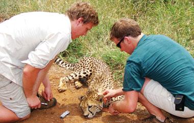 freiwilligenarbeit-zululand