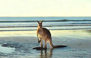 sprachen-megatrip-sprachaufenthalt-australien