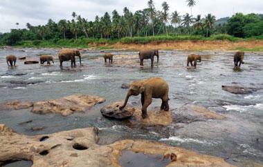auslandsaufenthalt-sri-lanka-teaser